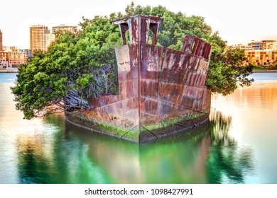 Historic Shipwreck in Homebush Bay, New South Wales, Sydney, Australia. The wreck is called SS Ayrfield. A floating mangrove forest Has grown on this wreck of a collier ship built in 1911.