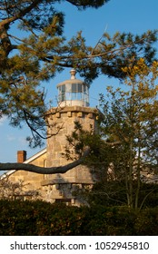 Historic Stonington Harbor lighthouse tower surrounded by evergreen tree branches without a lantern.