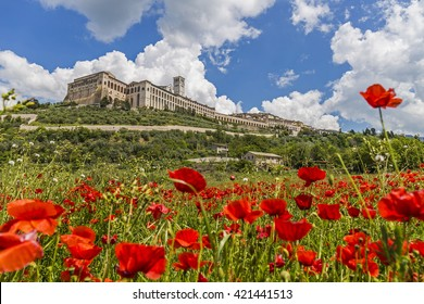 Historic town of Assisi in Italy. Basilica of St. Francis. View of the city of Assisi from a field of poppies