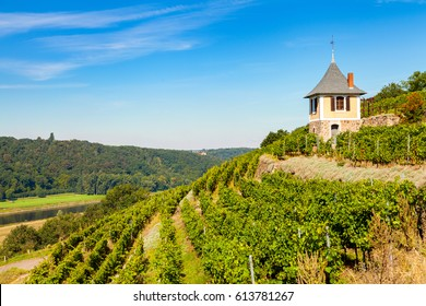 historic vineyard near Meissen, saxony, with small cottage at the top of the hill