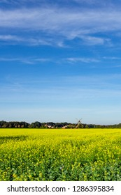 Historic windmill in front of yellow rape field