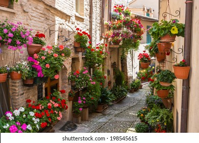 Historical alley with flowers