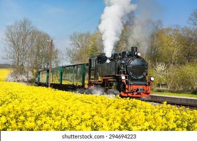 Historical steam train on island Ruegen going through rapeseed fields.