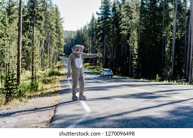 Hitchhiker in an elephant costume