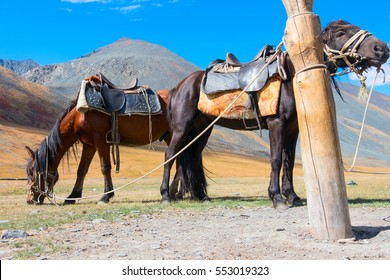 Hitching post and horses in the Altai Mountains
