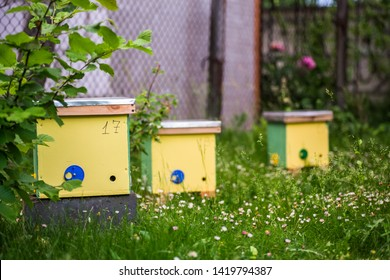 To hive a swarm, to make increase from a colony, make up a nucleus, rearing, rotating brood, to run a bee-yard. Yellow hives for cuttings of honey bees nucleuses in the garden among grass