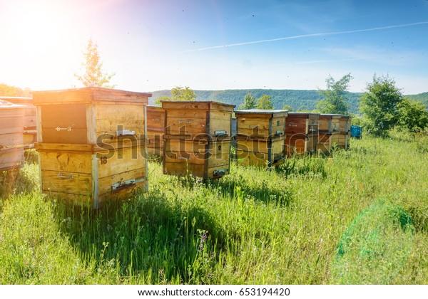 Bienenstöcke in einem Bienenlager, die zu den Landebrettern fliegen. Bienenzucht