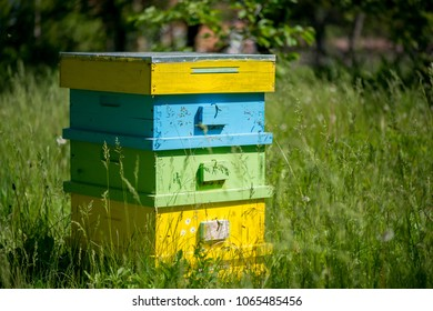 Hives in the apiary - selective focus