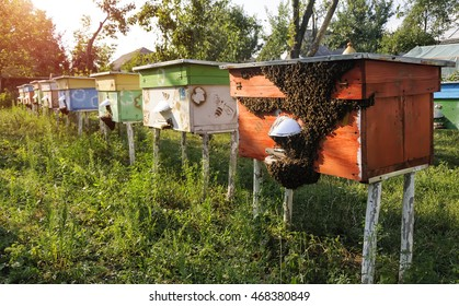 Hives of bees in the apiary, Apiculture