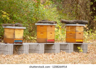 Hives in an paiary with bees fling to the landing board