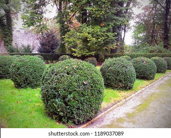 Hluboka Nad Vltavou, Czech Republic-October 1, 2014: English garden in the Castle. Trimmed bushes of round shape are on the lawn along the passageway. It is early autumn and leaves begin to fall.