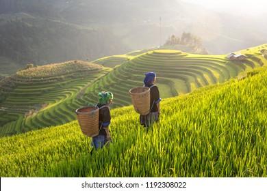Hmong ethnic minority women in Mu Cang Chai, Yen Bai. Vietnam