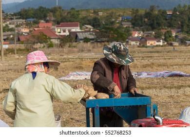 Hmong ethnic slice cassava(manioc) by machince at Thongnamy Village, Khamkert District, Bolikhamxay province in Laos, January 07 - 2017.