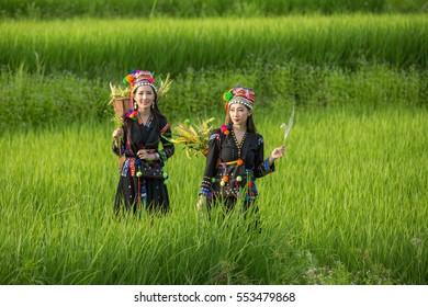 Hmong Girls in the green rice fields.