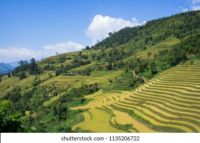 Hmong village at golden rice terraces field