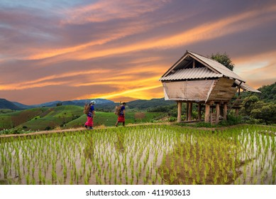 Hmong woman with rice field terrace background in Chiangmai , Thailand