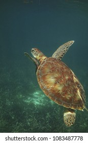 Ho Chan Marine Reserve & Shark Ray Alley