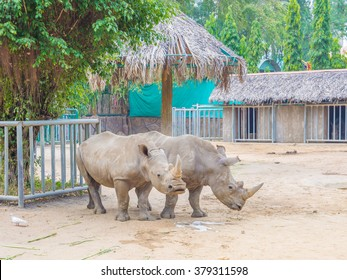 HO CHI MINH CITY - JAN 22: White rhinoceros at the Saigon Zoo and Botanical Gardens in Ho Chi Minh City, Vietnam on January 22, 2015. Ho Chi Minh City is the largest city in Vietnam.