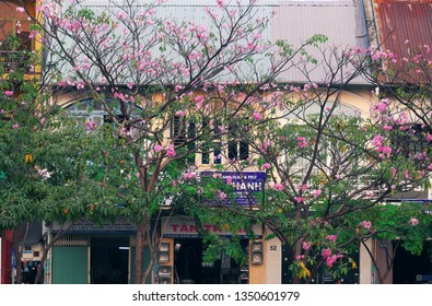 HO CHI MINH CITY, VIET NAM- MARCH 18, 2019: Street of Saigon in tabebuia rosea flower season, pink flower bloom beautiful cover row of old house make romantic scene at Vietnam