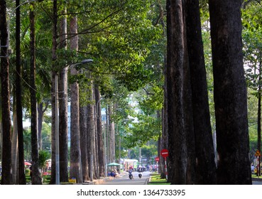 HO CHI MINH CITY, VIET NAM- MARCH 25, 2019: Amazing green trees at Saigon inner city in hot day of summer, beautiful, straight and tall row of tree along street make fresh air and nice urban landscape