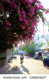 HO CHI MINH CITY, VIET NAM- APRIL 1, 2019: Man ride bicycle for do exercise move on street under bougainvillea flower tree canopy, his shadow is long on road surface, pink flower bloom vibrant, Vietna