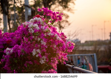 Ho Chi Minh City, Vietnam - February 6th, 2020: Boating along canal carry flowers with apricot, confetti, almond tree to sell everyone distillation welcome spring Tet in Ho Chi Minh City, Vietnam