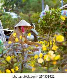 HO CHI MINH, VIETNAM - FEB 17, 2015: An unidentified woman selling flowers and kumquat trees for Tet has dinner. She sits behind blossoming apricot trees - main symbol of Tet in Southern Vietnam.