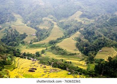 Hoang Su Phi District, Ha Giang Province is beautiful in harvest season.