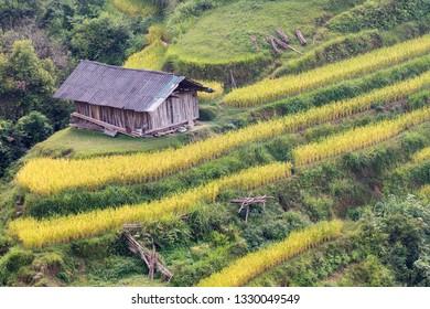 Hoang Su Phi , Ha Giang city in North west Vietnam