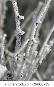 Hoar frost covers small branches.