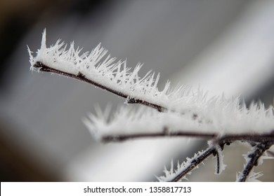 Hoar frost on a branch in Vernon BC