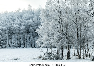 Hoar frost on trees around a frozen lake