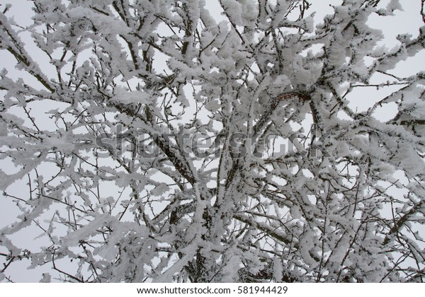 Hoarfrost on branches.