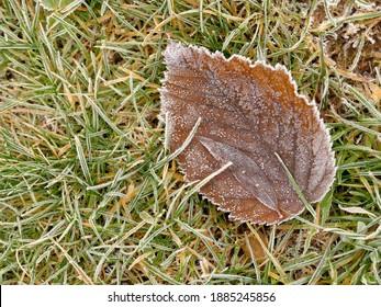hoarfrost on fallen leaf in winter
