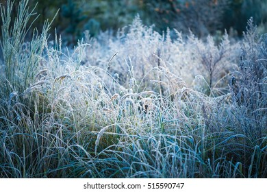 Hoarfrost on grass. Frosted grass at cold winter day, natural background.