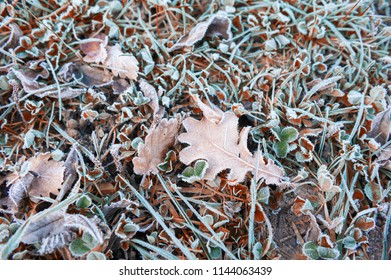 Hoarfrost on the leaves in autumn forest. Shallow depth of field. Beautiful nature background.