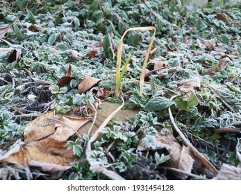 hoarfrost on weeds in the garden in neutral light