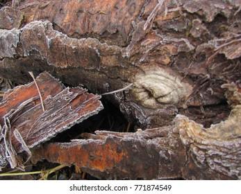 hoarfrost on wood