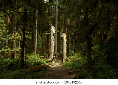 Hoh Rain Forest, Olympic National Park, Washington, USA