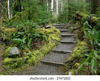 Hoh Rain Forest Pathway