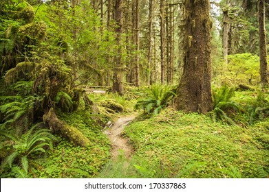 Hoh Rainforest in Olympic National Park, Washington State, USA