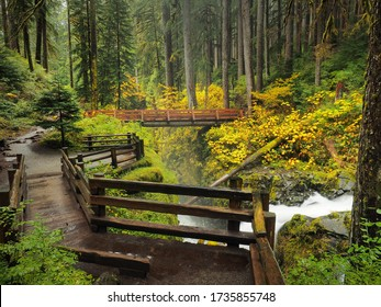 THE HOH RAINFOREST, OLYMPIC NATIONAL PARK - OCTOBER 7: Trekking is one of the most popular activities in The Hoh Rainforest, Olympic National Park on October 7, 2019