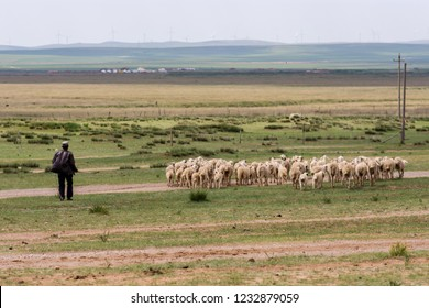 Hohhot, Inner Mongolia Province / China - July 30th 2016: Shepherd herding sheep in the grassland of the Inner Mongolia steppe, China.