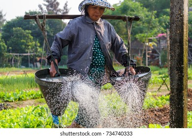 HOI AN, VIETNAM - 4/25/2016: A woman farmer waters the plants at Vegetable Village in Hoi An, Vietnam.