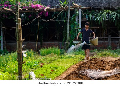 HOI AN, VIETNAM - 4/25/2016: A young farmer waters the plants at Vegetable Village in Hoi An, Vietnam.