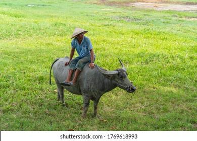 Hoi An, Vietnam - June 29, 2020 : Vietnamese man riding a buffalo in a green field near Hoi An, Vietnam