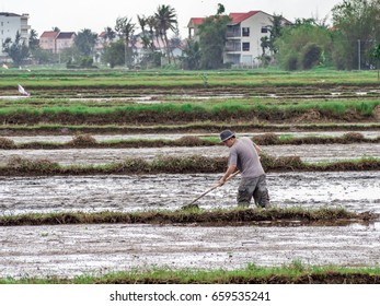 Hoi An region in Vietnam – January 2017: At the beginning of the season Vietnamese workers plant rice in the flooded field