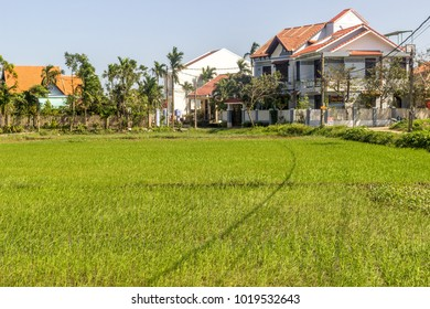 Hoi An / Vietnam - February 06 2017: summer day in rice fields