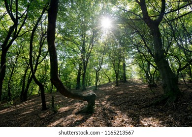 The Hoia Baciu forest, one of the most haunted forest in the world.