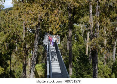 HOKITIKA, NEW ZEALAND, MARCH 10, 2017: Visitors enjoy the view of temperate rainforest and the mountains from the 20m high viewing platform on the Treetops Walk.